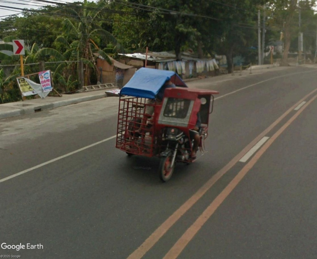 STREET VIEW : Transport d'animaux Cochon10