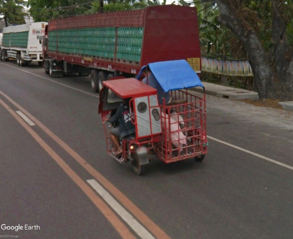 STREET VIEW : Transport d'animaux Cochon11