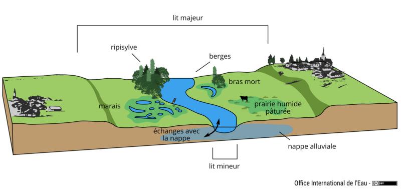 La vraie largeur des rivières Cours_10