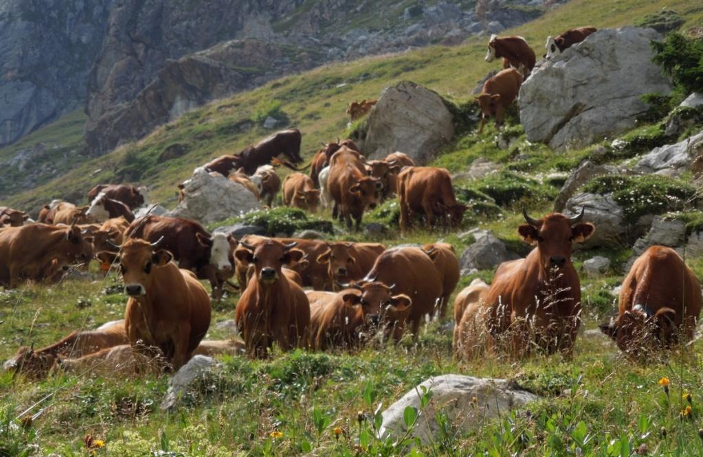 Les villages qui ont donné leur nom à un fromage (sujet touristique !) Dscn1010