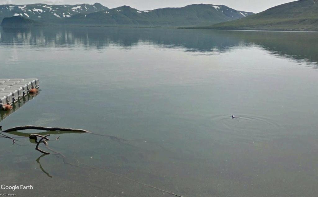 Ours (et saumons) dans le Kamtchatka Dud410