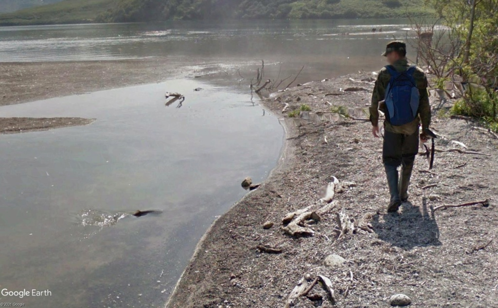 Ours (et saumons) dans le Kamtchatka Eeeyy10