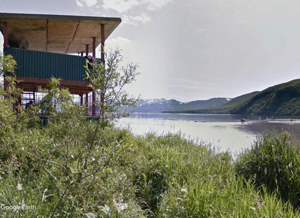 Ours (et saumons) dans le Kamtchatka Eeeyy_10