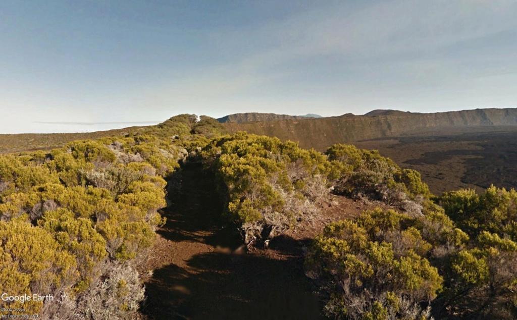 Végétation de la Réunion Envlos10