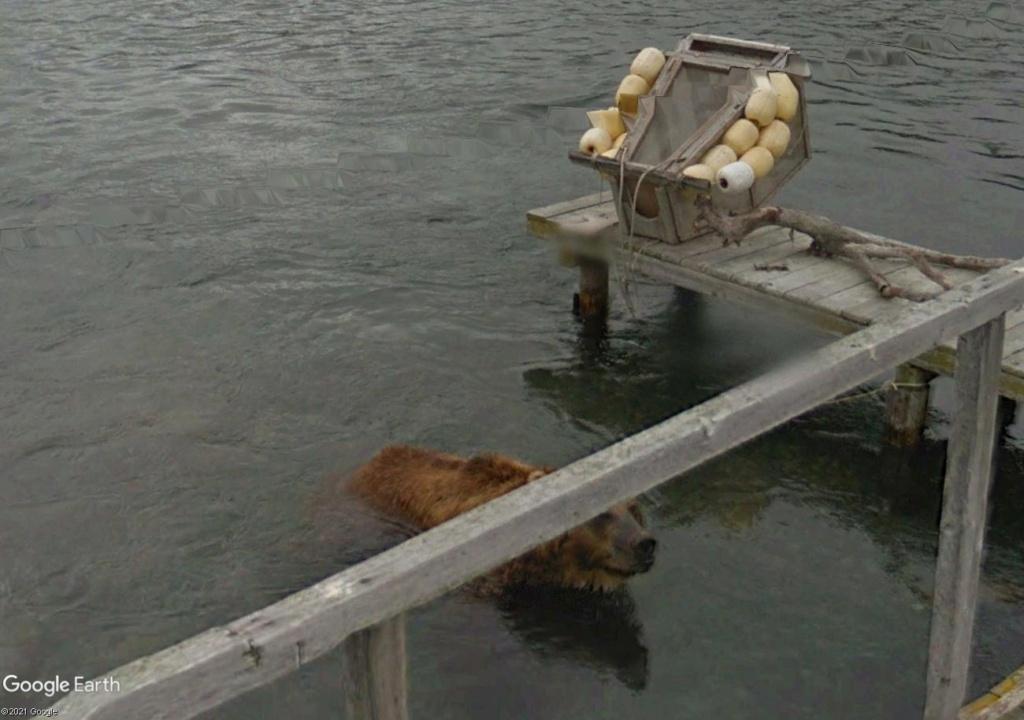 Ours (et saumons) dans le Kamtchatka Ff223311