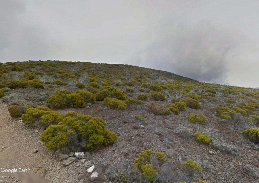 Végétation de la Réunion Gd_ben10