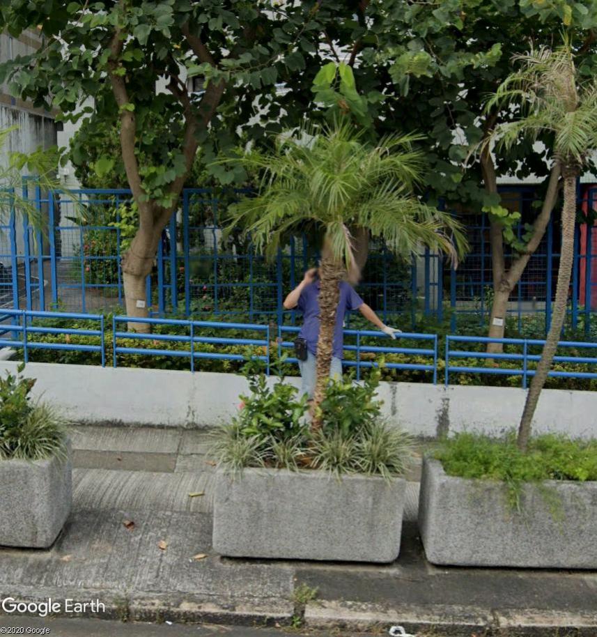 Un palmier qui téléphone Palmie11