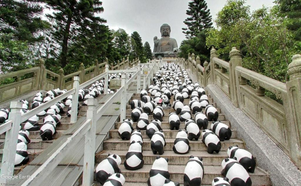 """Hong Kong à l'heure de la """"normalisation"""" : un voyage en images - Page 3 Panda_10"""