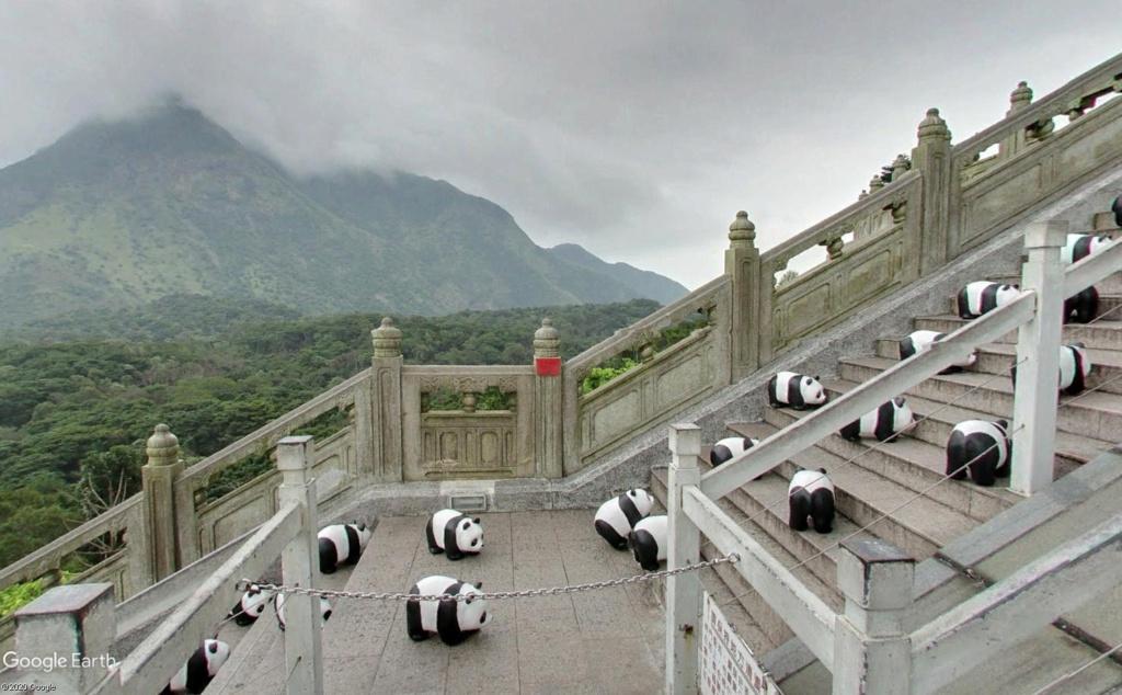 """Hong Kong à l'heure de la """"normalisation"""" : un voyage en images - Page 3 Panda_11"""