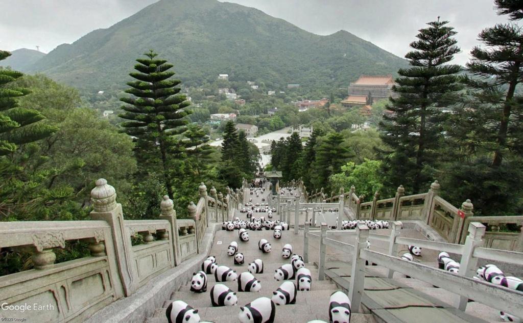 """Hong Kong à l'heure de la """"normalisation"""" : un voyage en images - Page 3 Panda_12"""