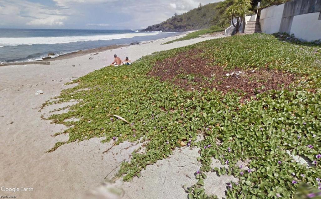 Végétation de la Réunion Patate11