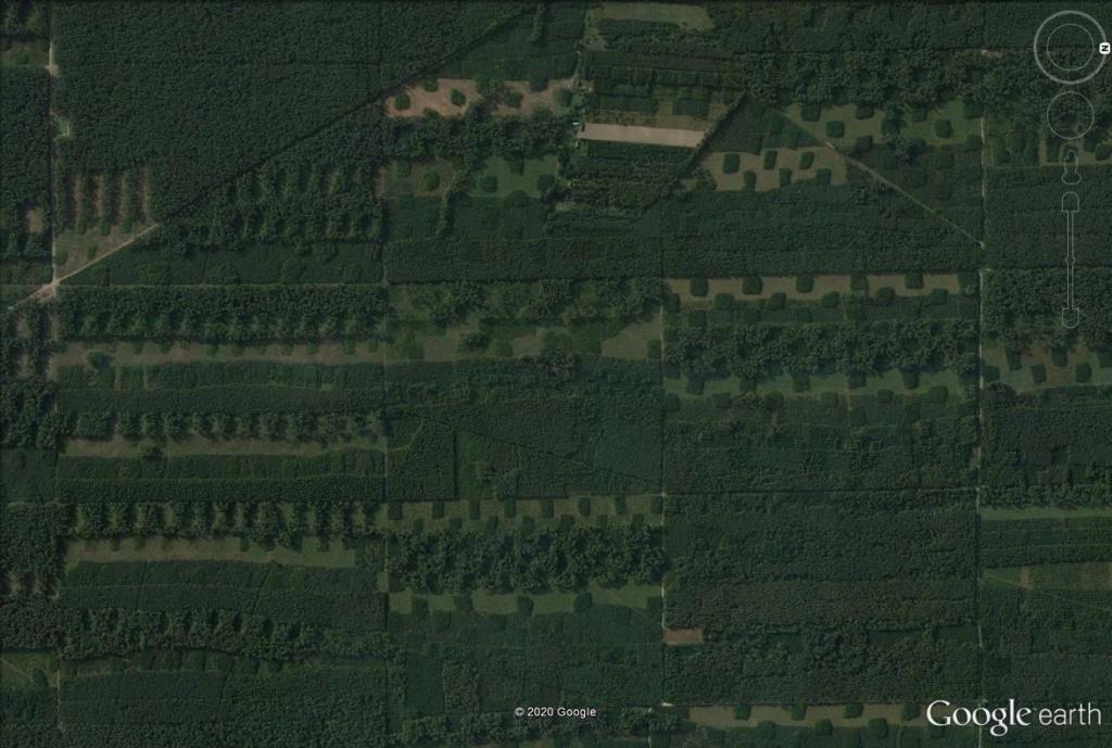 Les forestiers polonais sont-ils des artistes ? Pol110