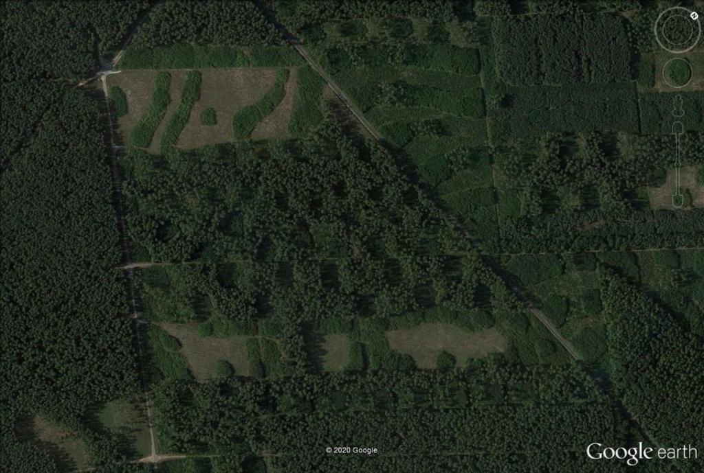 Les forestiers polonais sont-ils des artistes ? Pol210