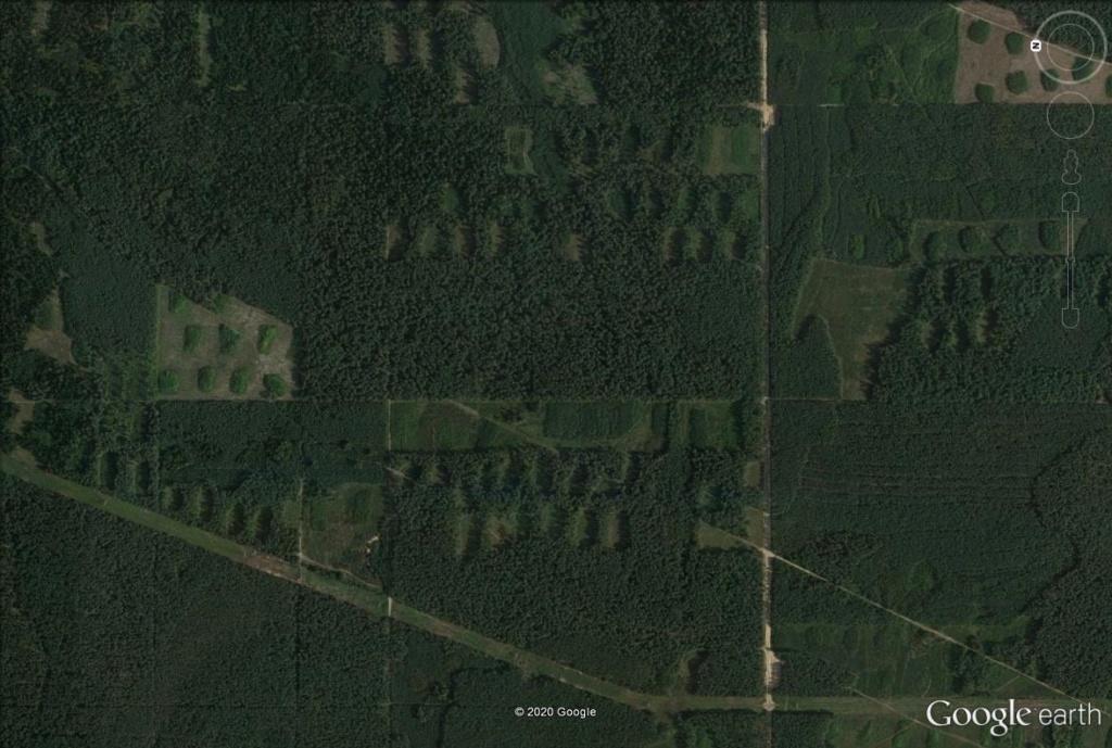 Les forestiers polonais sont-ils des artistes ? Pol310