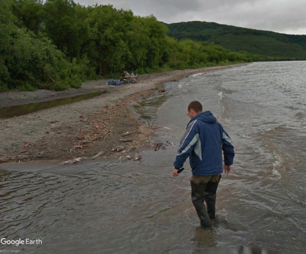 Ours (et saumons) dans le Kamtchatka Sergbh12