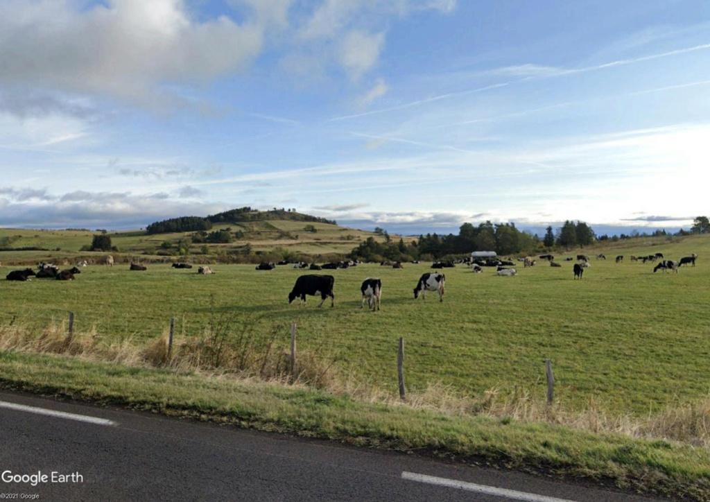 Les villages qui ont donné leur nom à un fromage (sujet touristique !) Vaches10