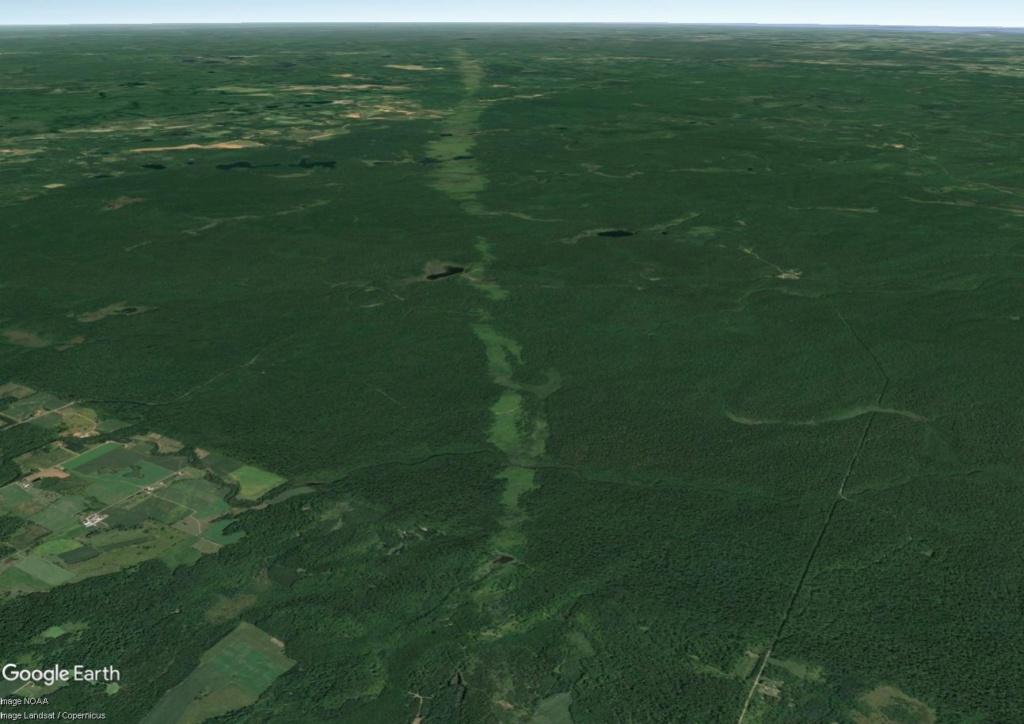 Une intrigante forêt dans le Wisconsin (Réserve indienne Menominee) Wi_50_10
