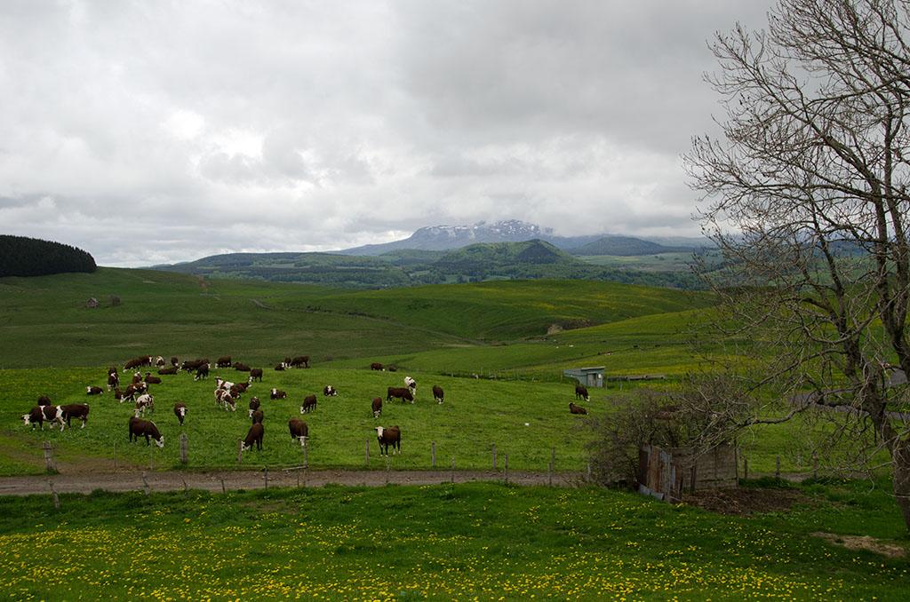 La Mongolie auvergnate _dsc4112