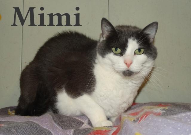 MIMI - 6 ans - SLPA à Amance (54) Mimi_310