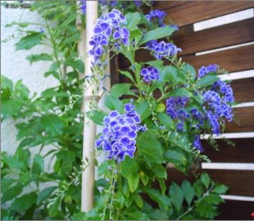 Les fleurs bleues Du10