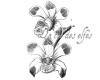 l'île de la tentation ... - Page 2 Orchid10