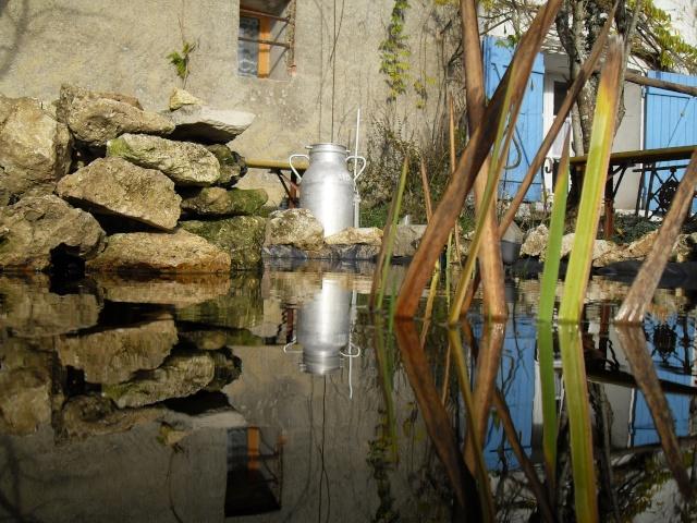 Votre photo pour Décembre 2009 - Page 2 Sdc12211