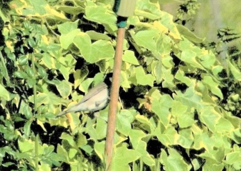 les oiseaux et petites bêtes au cours de nos balades - Page 38 9mars10