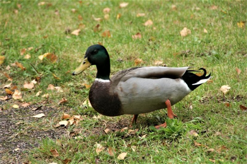 les oiseaux et petites bêtes au cours de nos balades - Page 8 Dsc06710