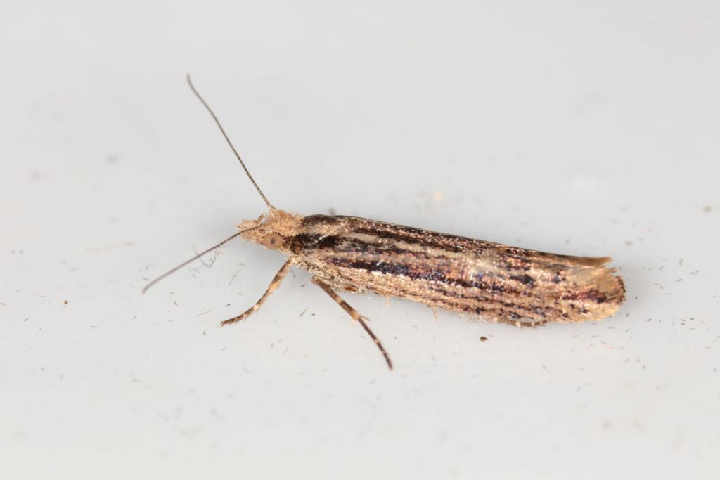 Un micro pour identification, svp 051a7911