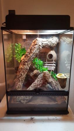Terrarium gecko à crête 20190210