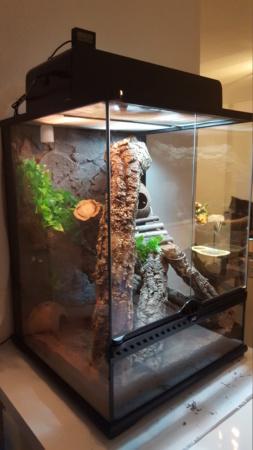 Terrarium gecko à crête 20190211