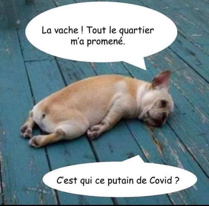 L'humour au temps du coronavirus - Page 4 Chien_10