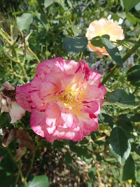pas de vacances pour nos jardins Lundi130