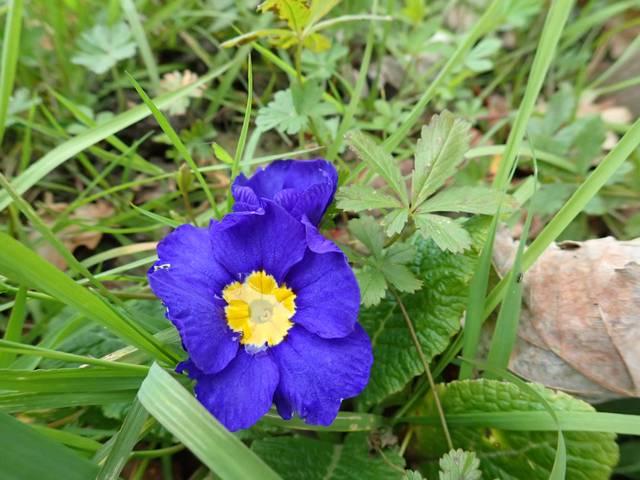 Blue..........bleu !!! - Page 15 P1230020