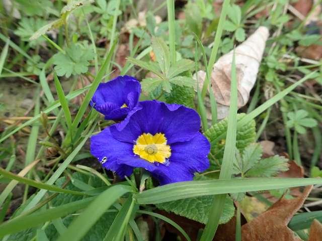 Blue..........bleu !!! - Page 15 P1230021