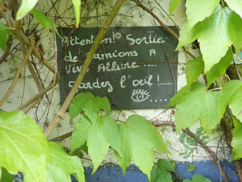 Village jardin exotique de Trentemoult (44) P4282215