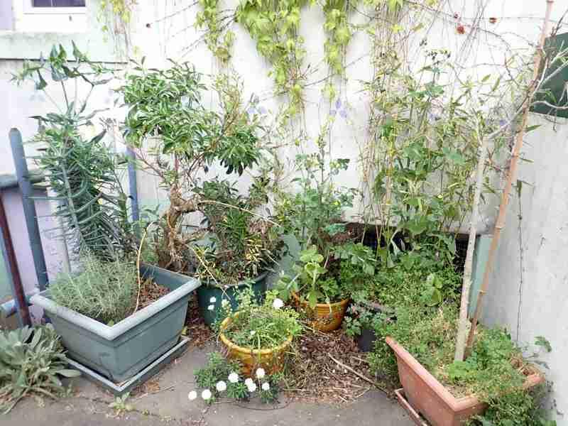 Village jardin exotique de Trentemoult (44) P4282217