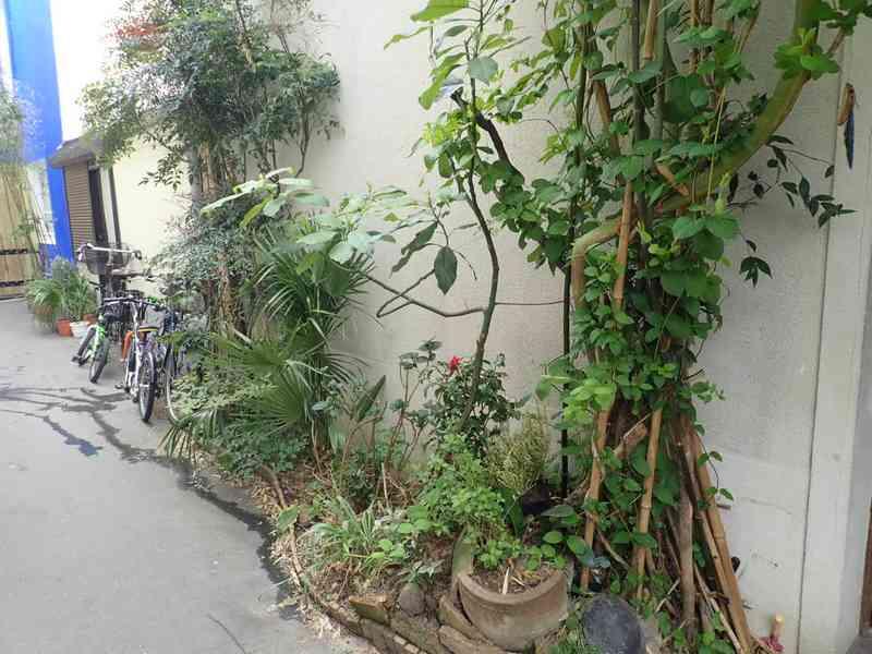 Village jardin exotique de Trentemoult (44) P4282231