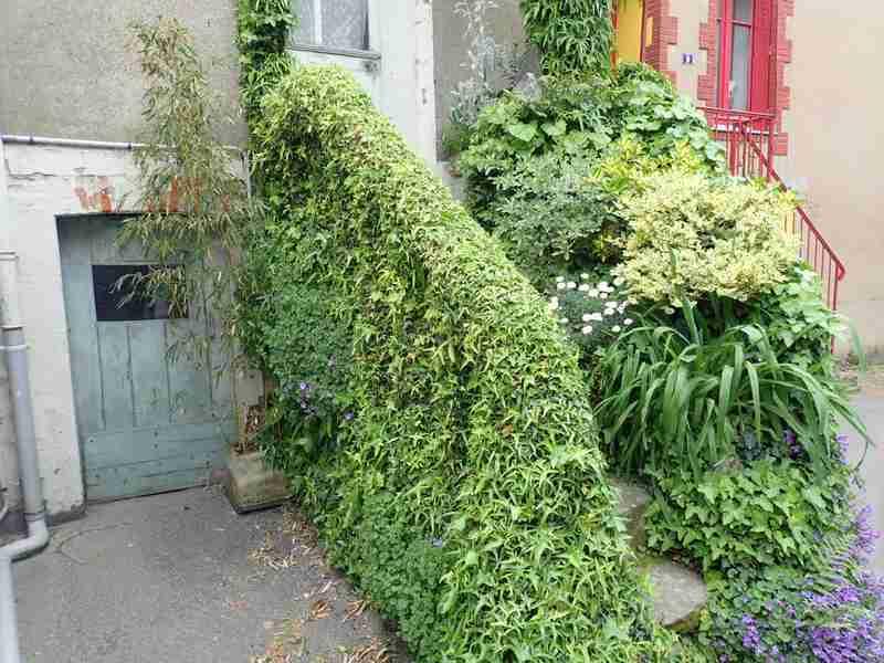 Village jardin exotique de Trentemoult (44) P4282233
