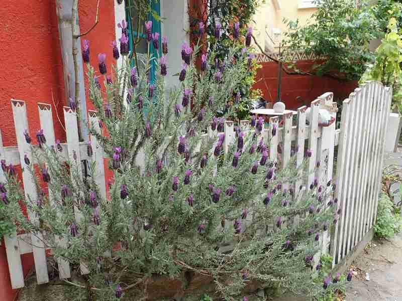 Village jardin exotique de Trentemoult (44) - Page 2 P4282247