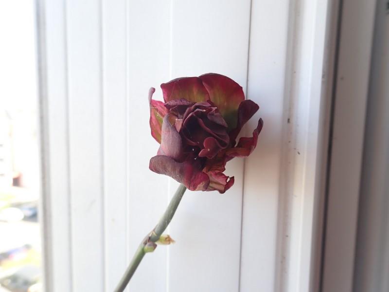 chaleureuses floraisons P7130113