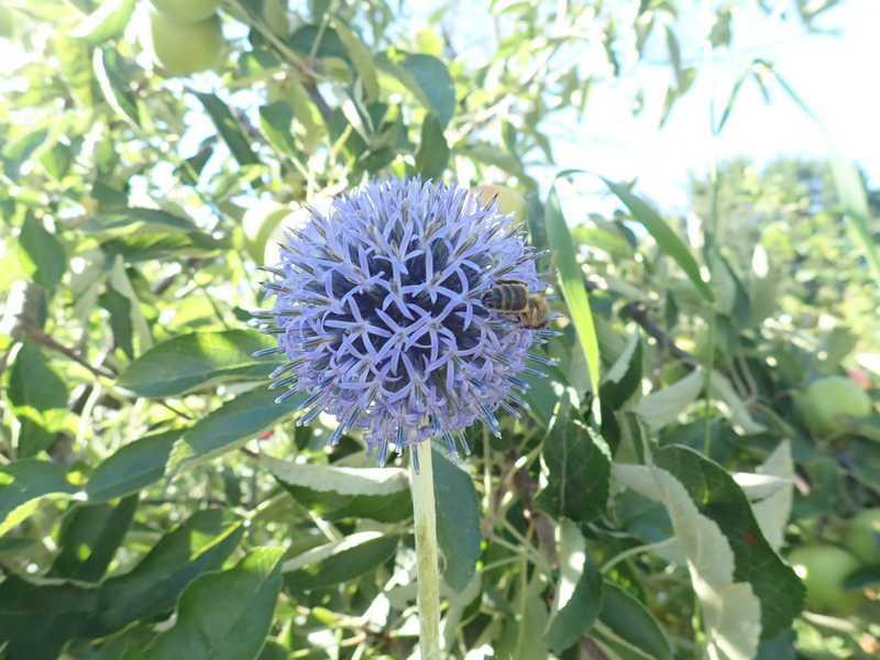 chaleureuses floraisons P7150011