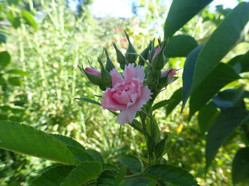 chaleureuses floraisons P7150012