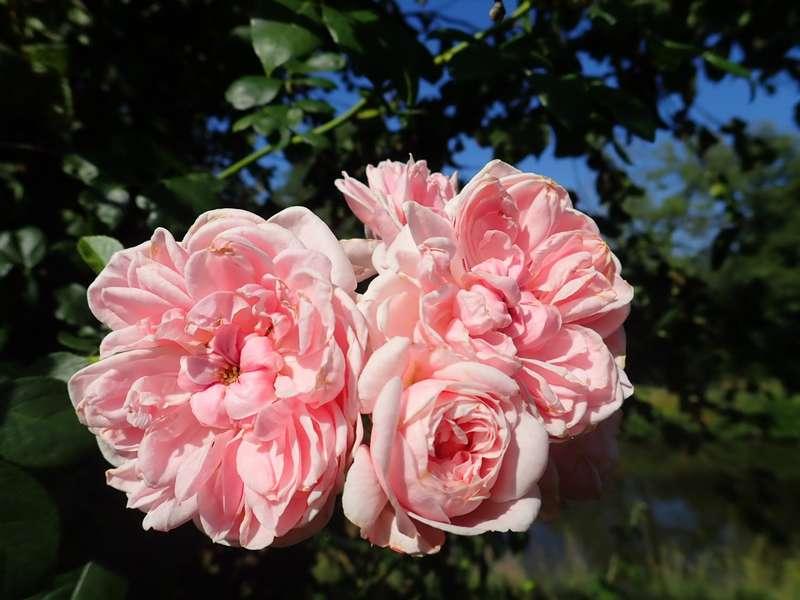 chaleureuses floraisons - Page 2 P7220011