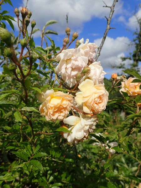 bouquets déshydratés P8120019