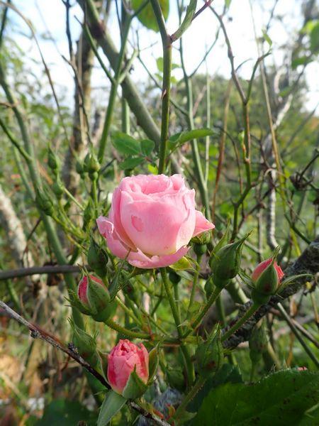 Brumes de fleurs Pb020028