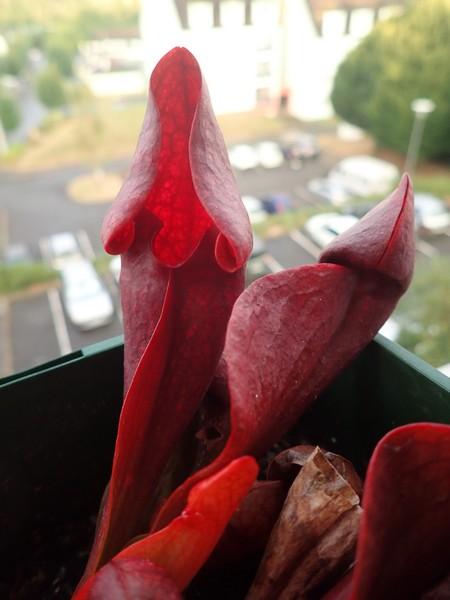 Plantes carnivores de Bip. Samedi54