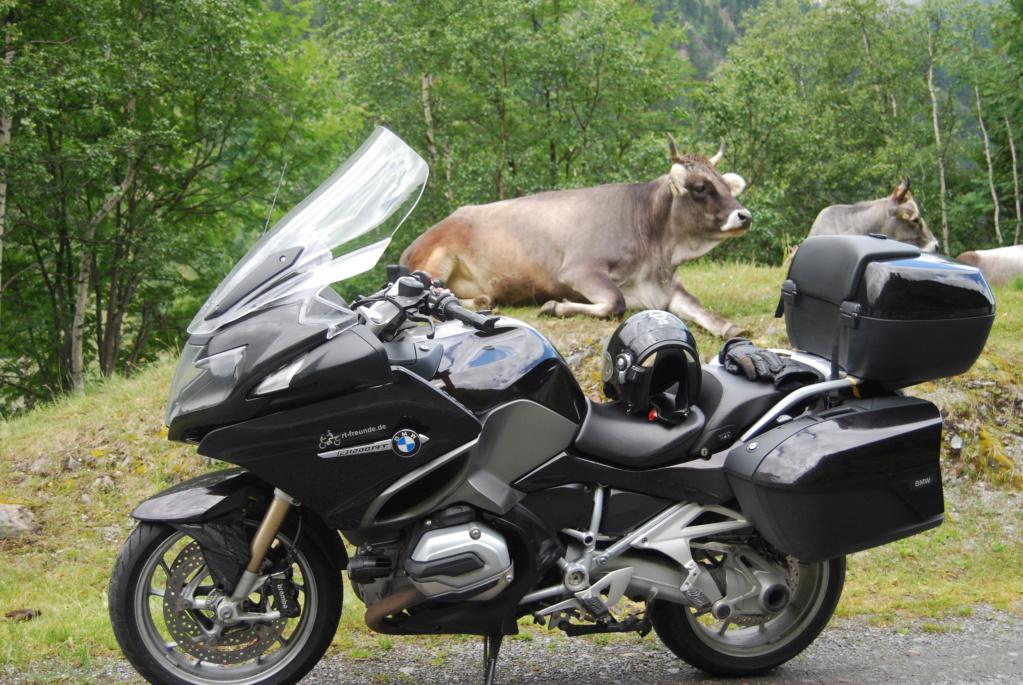 Kühe unter sich an der Kauerlater Gletscherstraße Dsc_0212