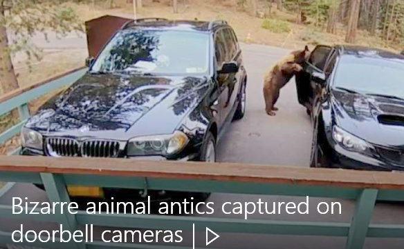 Dang Nosy Wildlife... Fullsc24