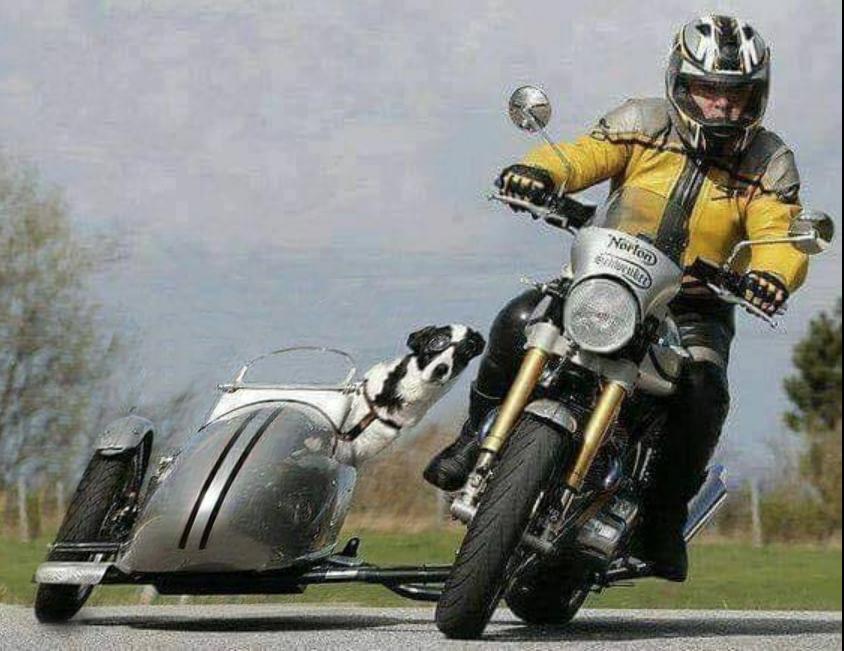 Humour en image du Forum Passion-Harley  ... - Page 29 Capt3911